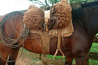 Horse, Saddle, Rio Grande do Sul, Brazil