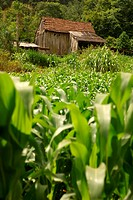Ranch, plantations, corn, agriculture, Brazil (thumbnail)