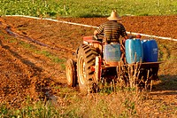 People, man, tractor, plantations, agriculture, Brazil (thumbnail)