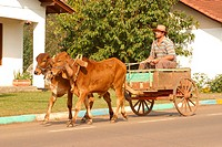 Transport, oxcart