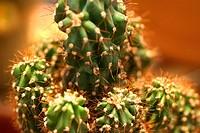 Flowers, cactus, nature