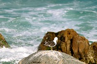 Beaches, bird, nature, coast line, Brazil (thumbnail)