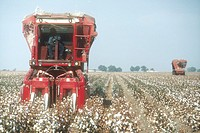 Cotton harvesting, San Joaquin Valley, CA.