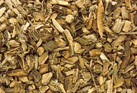 Dried great burdock (Arctium lappa), an herb used medicinally in the treatment of skin disorders and gout. It has diuretic and diaphoretic properties,...