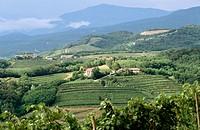 Collio region. Friuli-Venezia Giulia, Italy