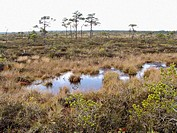 Tuhu Soo reserve. Estonia
