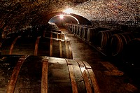 Rows of Barrels in a Moist, Dark Cellar