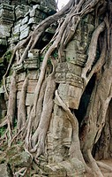 Ta Prohm Temple (12th Century). Angkor. Cambodia