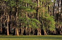 Breaux bridge, Lake Martin Reserve, lake, Louisiana, marsh, scenery, landscape, trees, USA, America, United States,