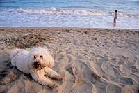 Miracle beach. Tarragona, Catalonia. Spain.