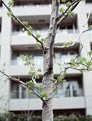 Tree near apartment building