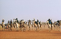 Niger. Niamey. Independence day. Camel races