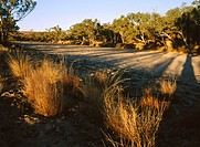 West MacDonald National Park. Northern Territory. Australian desert