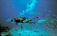 Scuba Diver with fishes. Guadeloupe