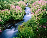 Creek. Mount Rainier. USA