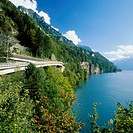 10266165, Axenstrasse, trees, main street, scenery, Switzerland, Europe, shore, Uri, Switzerland, Europe, lake Uri, lake, sea