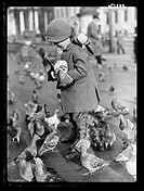 A photograph of a young boy feeding the pigeons in Trafalgar Square, London, taken by Tomlin for the Daily Herald newspaper.