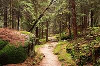 Forest path, Ochsenkopf, Fichtelgebirge, Franconia, Germany