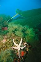 Underwater landscape, Mediterranean Sea