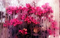Flowers in Rainy Window