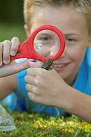 Boy Looking at Frog with Magnifying Glass