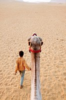 Young Bedouin boy leading a camel. Sinai Peninsula, Egypt