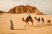 Camel caravan with male, female and young led by Bedouin guide. Sinai, Egypt