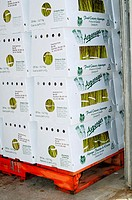 Asparagus boxes on shipping pallets (Asparagus officinalis) Bloomfield, Ontario, Canada