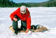 ice fishing, lapland, sweden