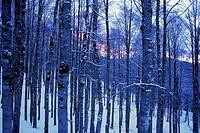 wood, snow