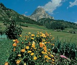 italy, alto adige, flowers in badia valley in summer time