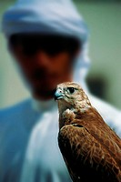 Arab man holding a falcon, UAE