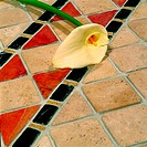 Single Calla Lily lying on tiled floor