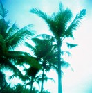 Palm trees (thumbnail)