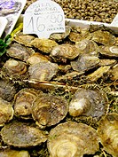 Oysters. La Boquer&#237;a market. Barcelona. Spain
