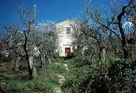 Basilicata, Olivenhain mit Bauernhaus