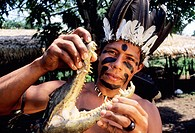 Sateré-Maué tribes man holds head of a caiman before serving to his family in the Amazon river region village.