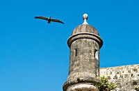 Puerto Rico, San Juan. City walls built in 1630, guard tower, pelican in flight