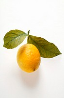 Fresh lemon with stalk and leaves