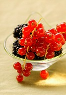 Blackberries and redcurrants in bowl