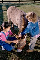 High angle view of two girls petting a donkey