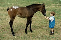 High angle view of a boy feeding a horse
