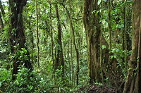 Thick rain forest, Costa Rica