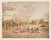 People sitting beneath cherry trees, Japan, c 1890.Group portrait by an unknown photographer of Japanese people enjoying the spring blossom.