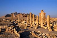 Ruins. Palmyra. Syria.