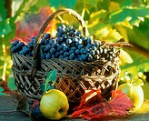 Black grapes in basket, a quince in front