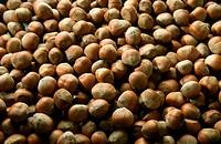 Hazelnuts, Full Frame