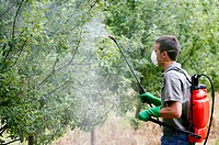 Farmer treating fruit trees with sprayer (Insecticides, Pesticides). Apple trees. Gipuzkoa, Euskadi. Spain