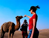 Western tourists feeding a baby camel, United Arab Emirates