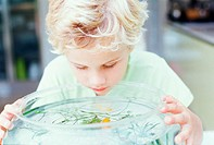 Boy looking into fish bowl